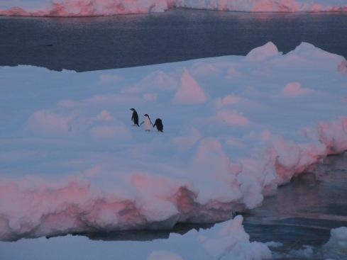 Manchots sur glace.jpg
